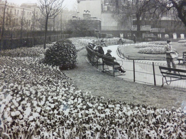 St James Churchyard Tulip beds 1931.jpg