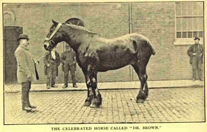 """DR. BROWN,BARCLAY & PERKINS HORSE."".jpg"