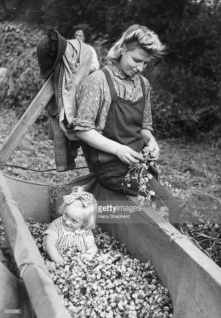 Mrs Rolls of Rotherhithe, London, keeps her eye on her little daughter Maureen while working in the hop fields. 12th September 1945.jpg